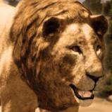 狮王模拟器