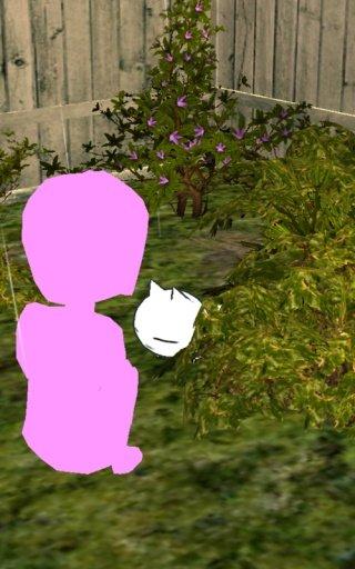 美绪家的小猫图2
