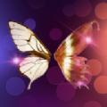 夜蝶交友app