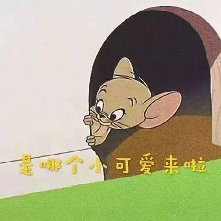 猫和老鼠手游无限钻石破解版