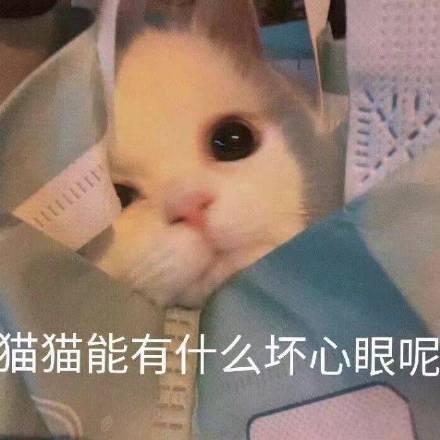 小动物能有什么坏心眼呢表清包